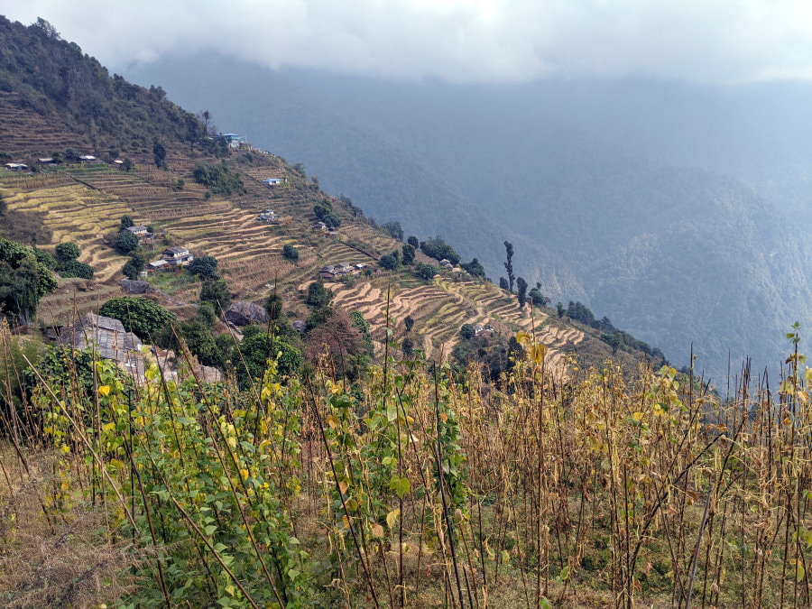Day 2 between Ghandruk and Chhomrong