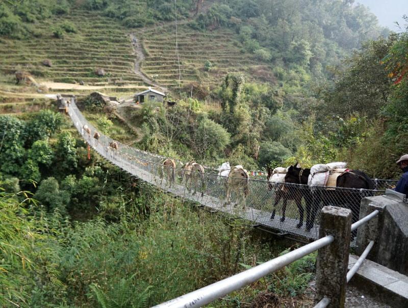 Donkey traffic jam on a bridge between Chhomrong and Himalaya