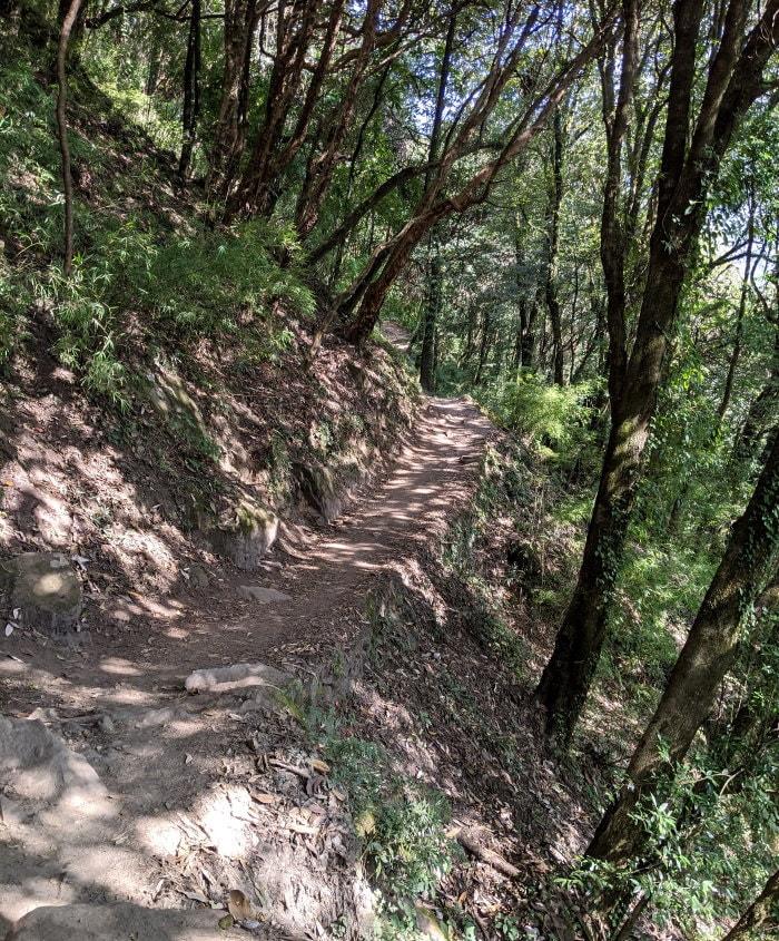 Jungle between Chhomrong and Himalaya
