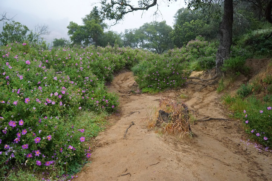 Santa Barbara Rattlesnake Canyon