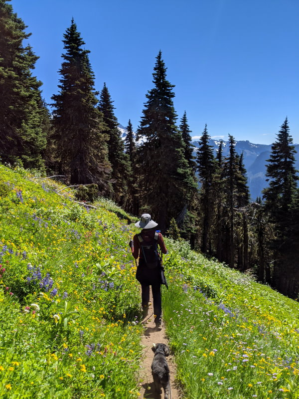Bearhead Mountain Flowers - Washington State