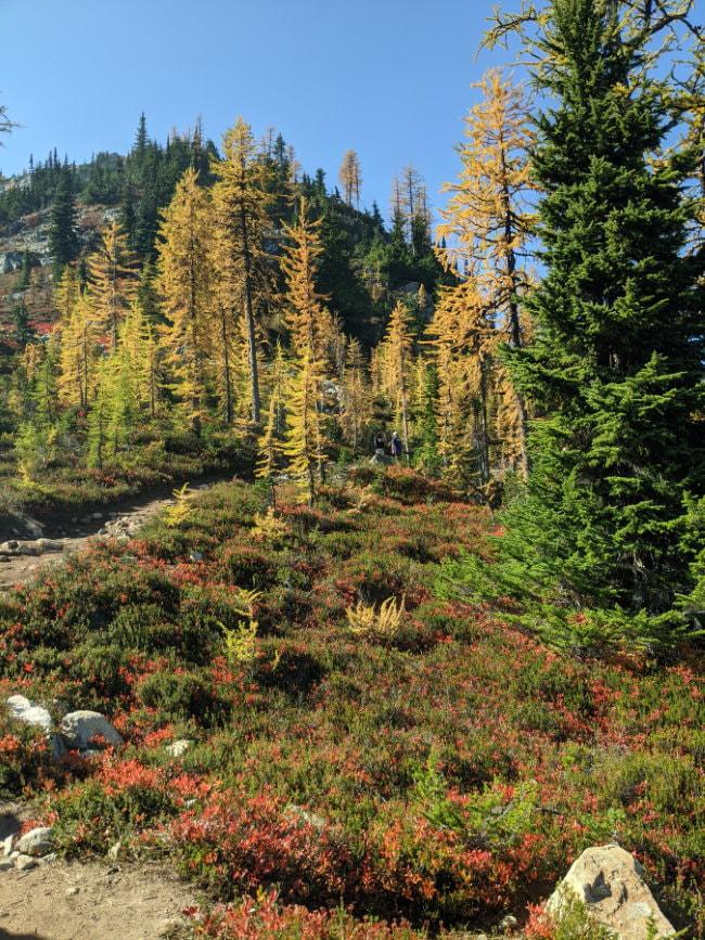 Heather Maple Pass - Washington State