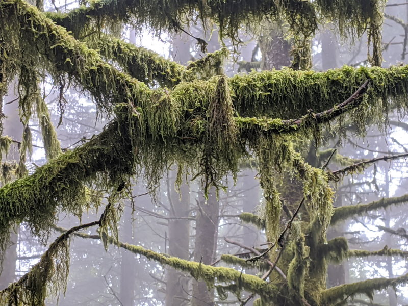 Poo Poo Point - Washington State